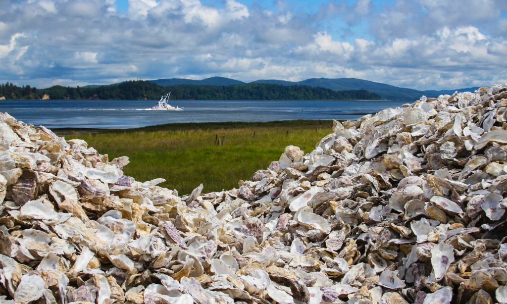 Long Beach Peninsula Oysters Willapa Bay