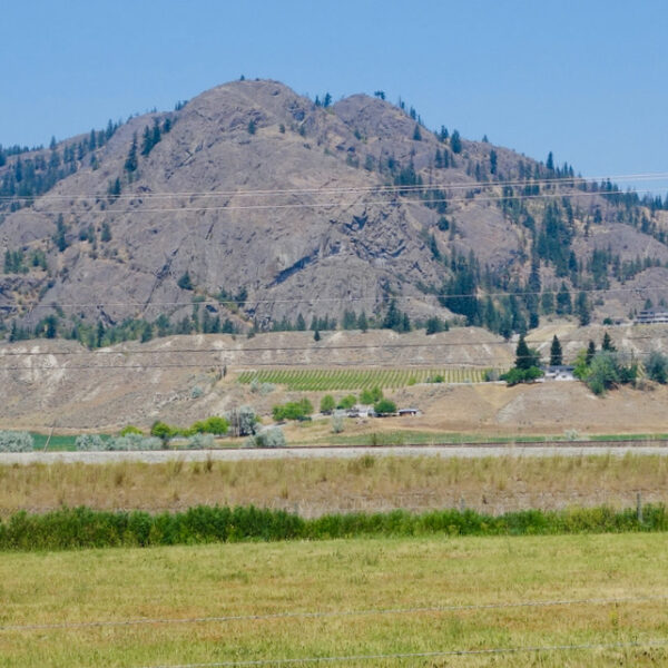 Monte Creek Ranch Winery Lions Head
